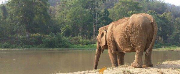 فیل ها