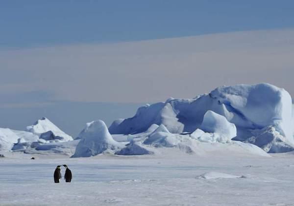 افزایش دمای شمالگان