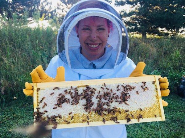 پرورش زنبور عسل توسط کارکنان گوگل