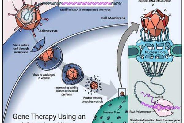 ژن درمانی