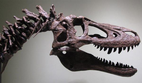 فسیل یک دایناسور