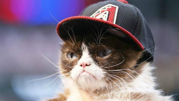 گربه عبوس اینترنت درگذشت