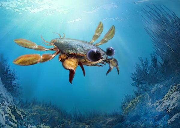 نابینایی موجودات بستر دریا
