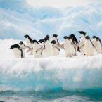 پیشنهاد محققان: کنترل افزایش سطح دریاها با بارش برف مصنوعی در قطب جنوب