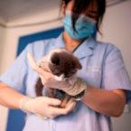 شبیهسازی گربه فریز شده در چین و نارضایتی صاحب آن