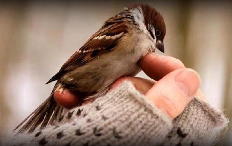جمعیت پرندگان