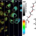 تولید نوعی دماسنج نانوذره برای اندازهگیری دمای سلولی