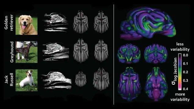 مغز سگها