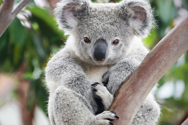 رازهای حیوانات استرالیا (مستند)