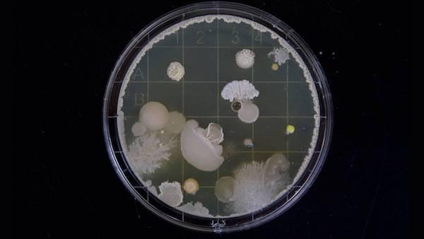 برنامه ریزی باکتری ها