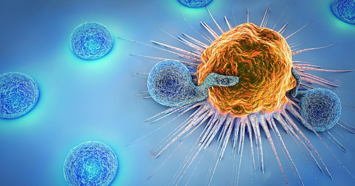سلول های CTL
