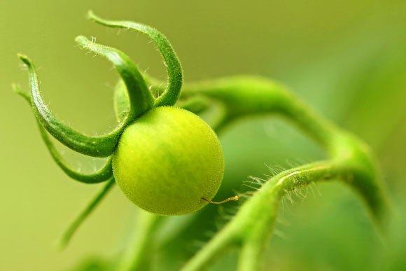گیاهان در زمان استرس از خود صدا تولید می کنند