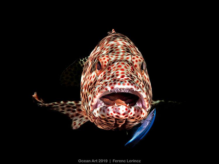 مسابقه عکاسی هنری از اقیانوس