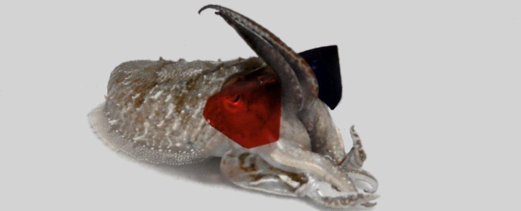 ماهی ده پا