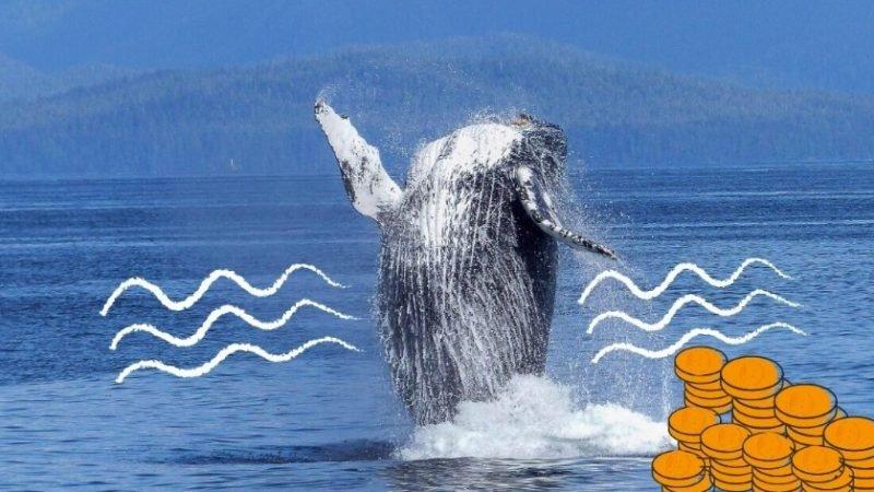 تراکنش یک میلیارد دلاری جدید توسط یکی دیگر از نهنگ های رمزارز