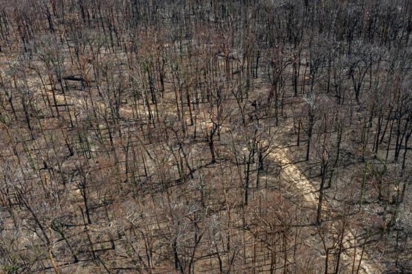 وقتی همه جنگل ها می سوزند
