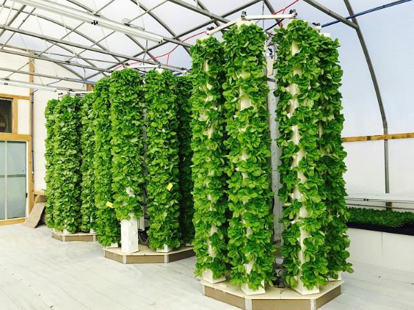 توسعه سیستمی برای کشاورزی خودکار بدون نیاز به خاک