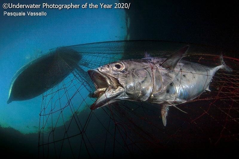 مسابقه عکاسی زیر آب سال ۲۰۲۰