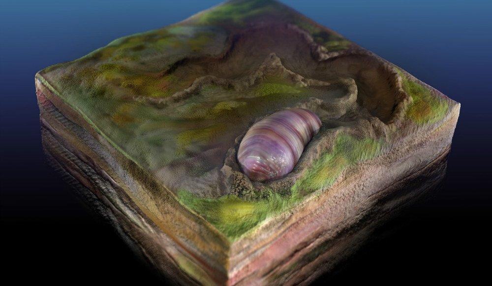 550 Million Fossil کشف فسیل ۵۵۰ میلیون ساله ایکاریا واریوتیا؛ جد احتمالی تمام جانوران اخبار IT