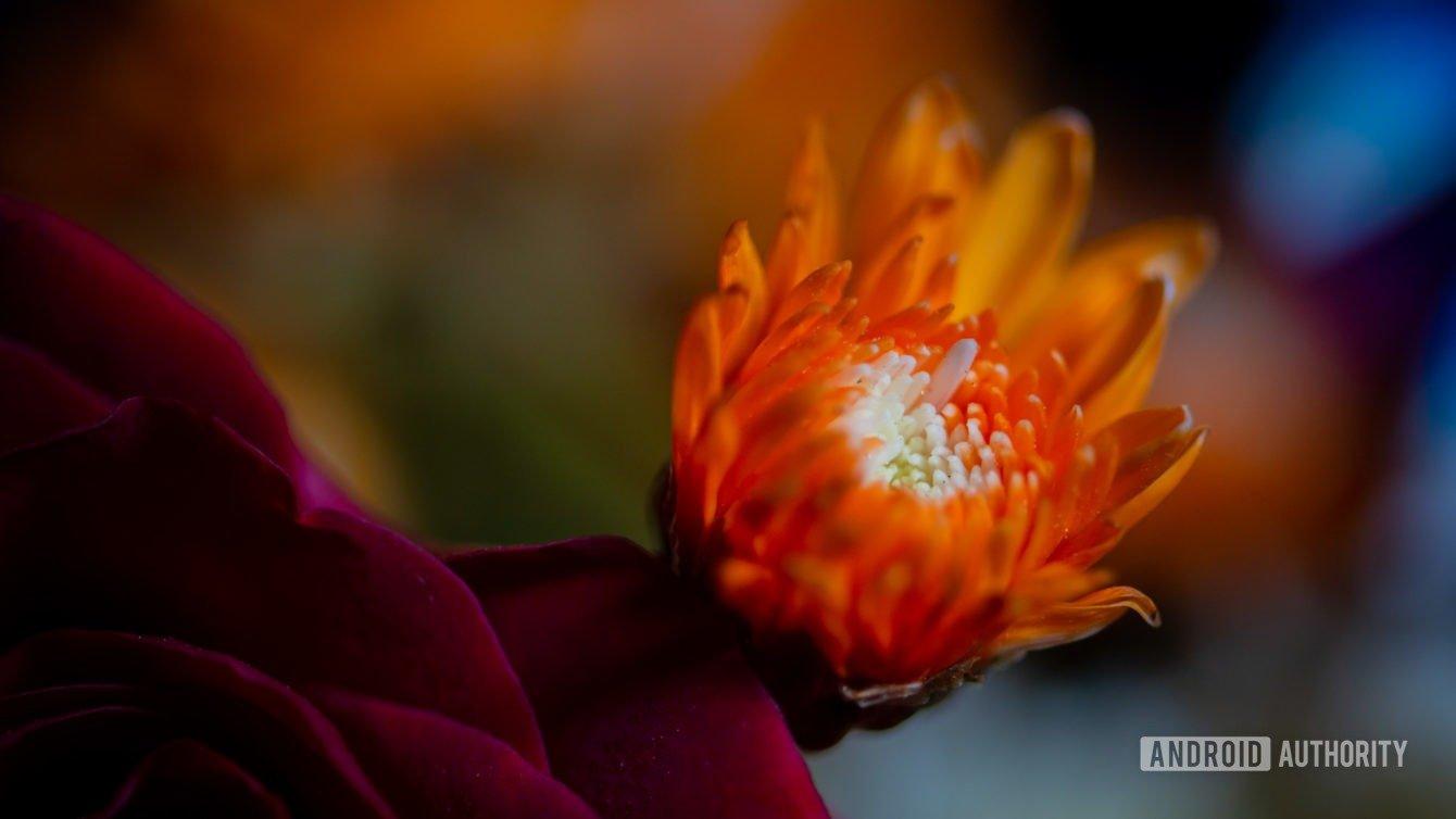 عکاسی ماکرو