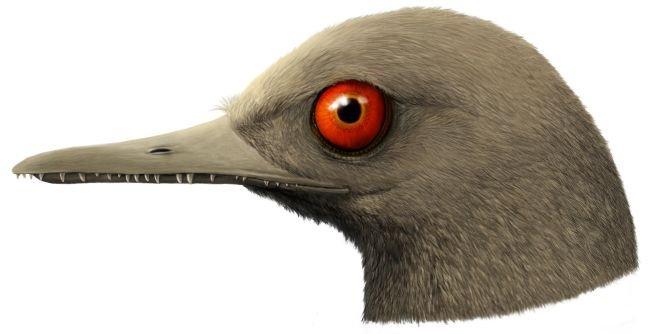 Wfr3SHcmBa87zWfDhfy4NL 650 80 کشف فسیل کوچک ترین دایناسور در صمغ ۱۰۰ میلیون ساله اخبار IT