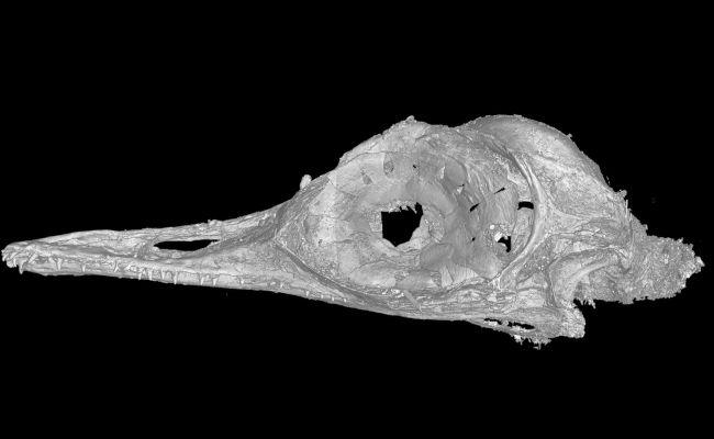 jJj7TPSv6L7htkCChCsHVL 650 80 کشف فسیل کوچک ترین دایناسور در صمغ ۱۰۰ میلیون ساله اخبار IT