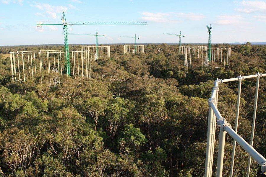 جنگلهای بالغ