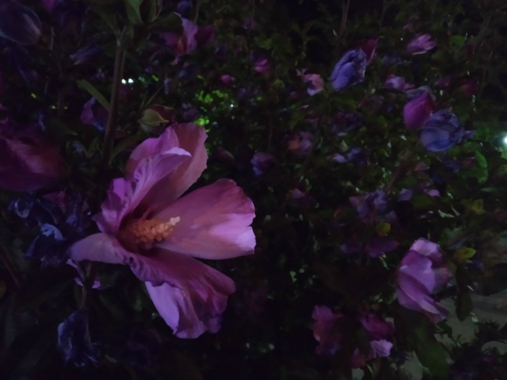 Nokia23 Cam Night09 بررسی دیجیاتو: گوشی نوکیا ۲.۳ ؛ خوش قیمت اما با قلبی کوچک اخبار IT