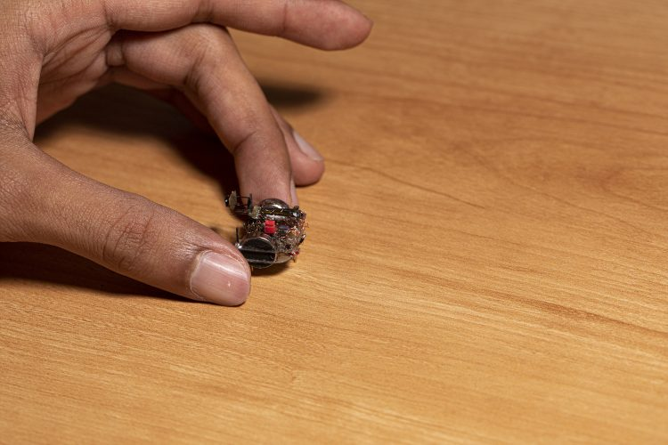 Miniature robotic camera backpack shows how beetles see the world 1 ساخت کوله پشتی دوربیندار برای سوسکها [تماشا کنید] اخبار IT