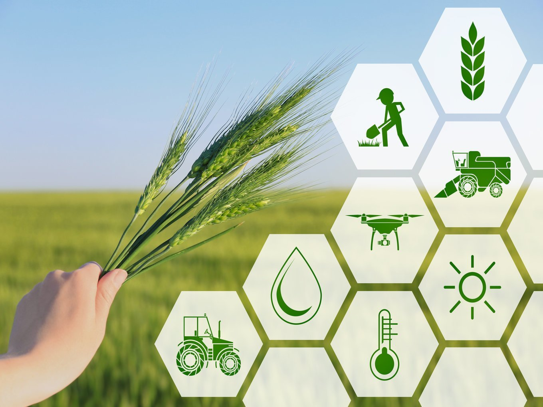 تامین ۱۲ میلیارد تومان سرمایه برای ۶ استارتاپ کشاورزی آغاز شد