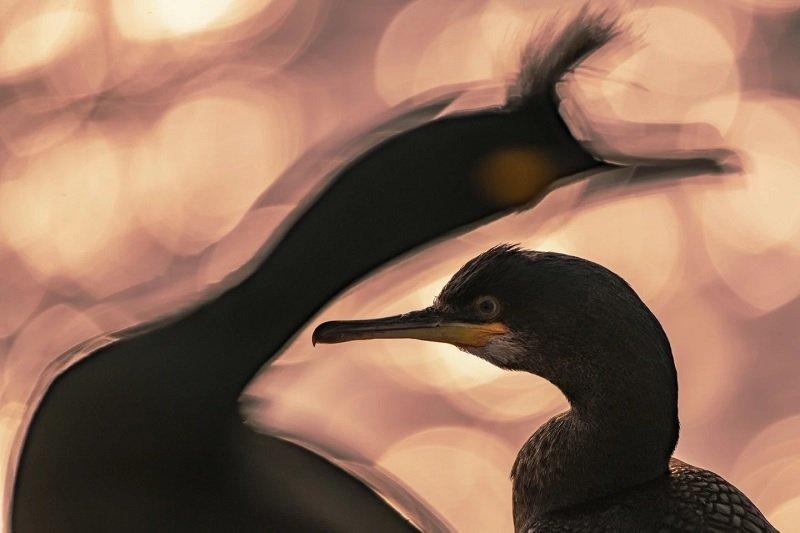مسابقه عکاسی پرندگان ۲۰۲۰