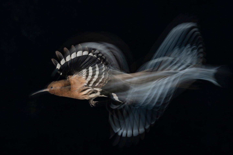 download 13 تصاویر برگزیده مسابقه عکاسی پرندگان ۲۰۲۰ مشخص شدند اخبار IT