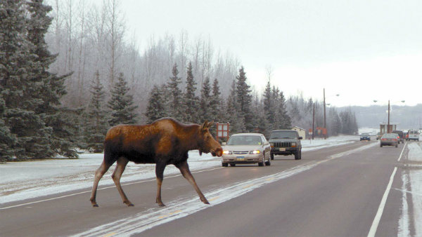 moose road تویوتا سوپرا در تست گوزن؛ عملکردی نه چندان درخشان برای کوپه ژاپنی آلمانی [تماشا کنید] اخبار IT