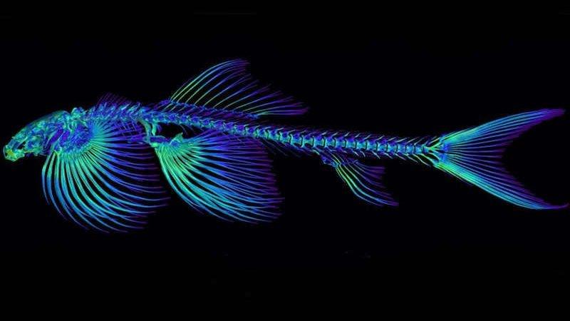 شناسایی ۱۰ گونه جدید ماهی که میتوانند روی خشکی راه بروند