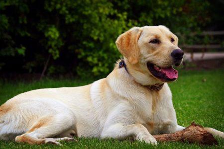فنلاند از سگها برای شناسایی کووید ۱۹ استفاده میکند