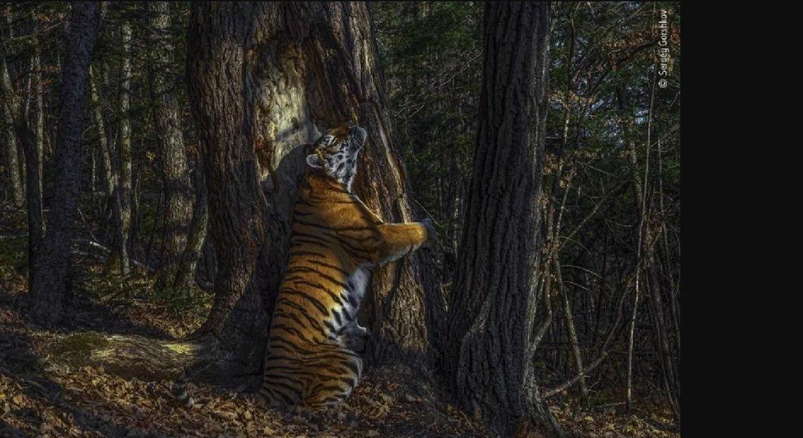 برندگان مسابقه عکاسی حیات وحش 2020 مشخص شدند