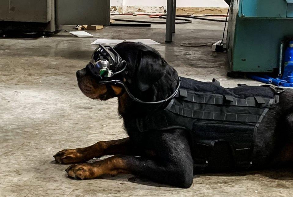 سگهای ارتش آمریکا به عینکهای واقعیت افزوده مجهز میشوند