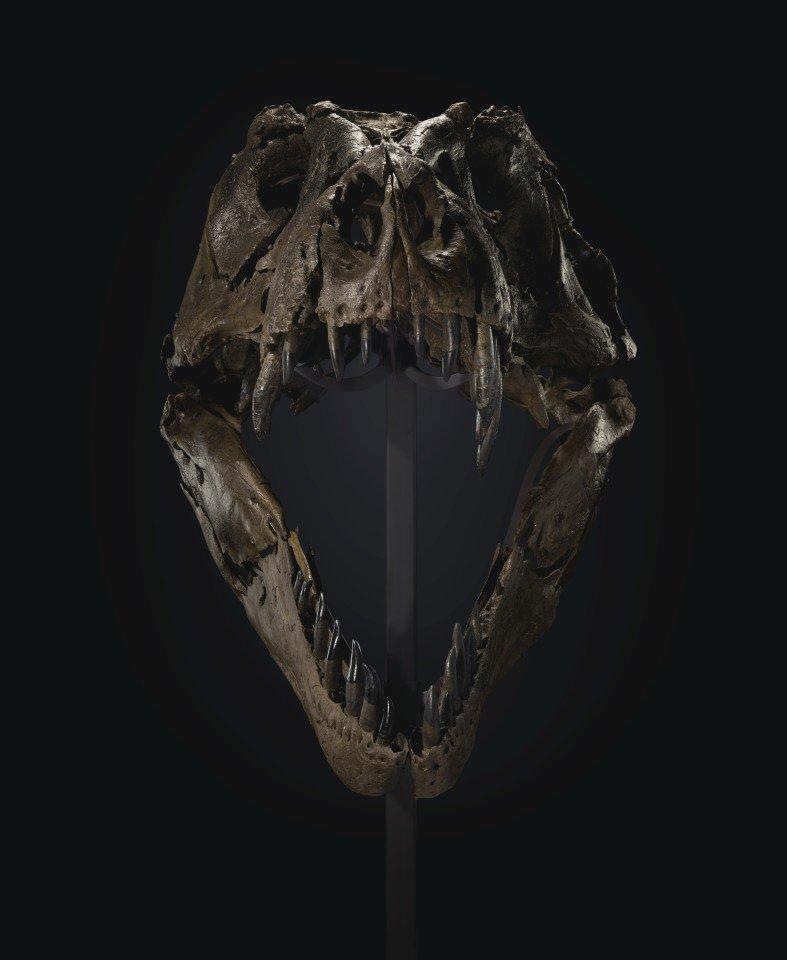 download1 اسکلت تیرکس در حراج «کریستی» رکورد گرانترین فسیل دایناسور تاریخ را شکست اخبار IT