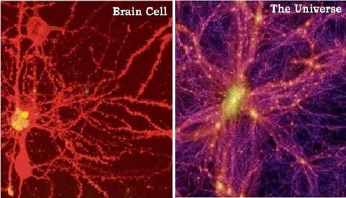 0 دانشمندان از شباهت شگفتانگیز بین ساختار جهان هستی و مغز انسان میگویند اخبار IT