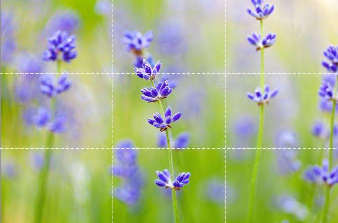 Blurred Flowers Background قانون یک سوم در عکاسی چیست و چگونه از آن استفاده کنیم؟ اخبار IT