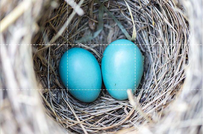 Eggs Center Placement قانون یک سوم در عکاسی چیست و چگونه از آن استفاده کنیم؟ اخبار IT