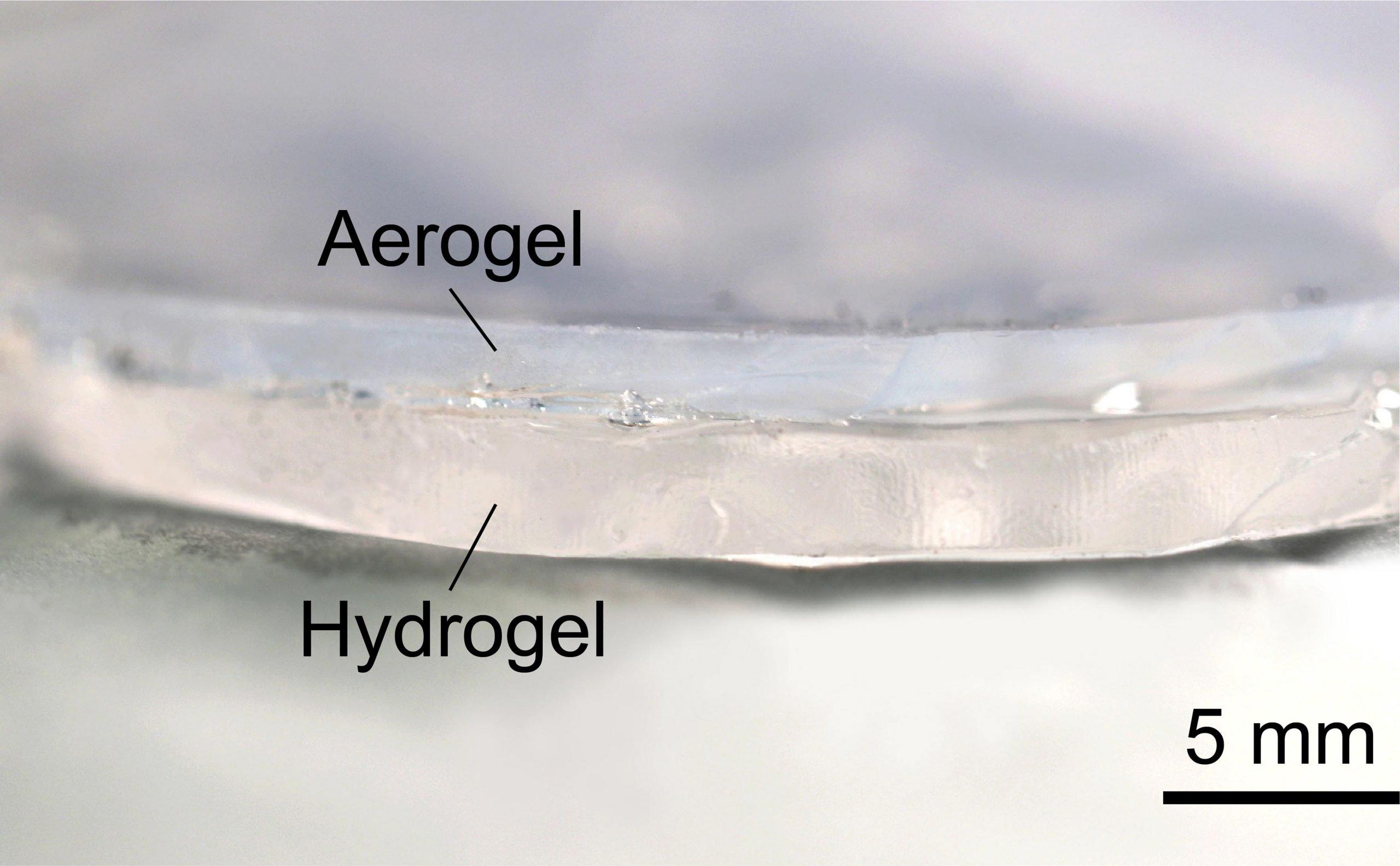 Transparent Hydrogel Aerogel Cooling Bilayer Labeled scaled محققان با الهام از کوهان شتر ماده خنک کننده بی نیاز از برق ساختند اخبار IT