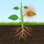 سنسور جدید MIT با قرارگیری درون گیاه سطح آرسنیک خاک را اندازهگیری میکند