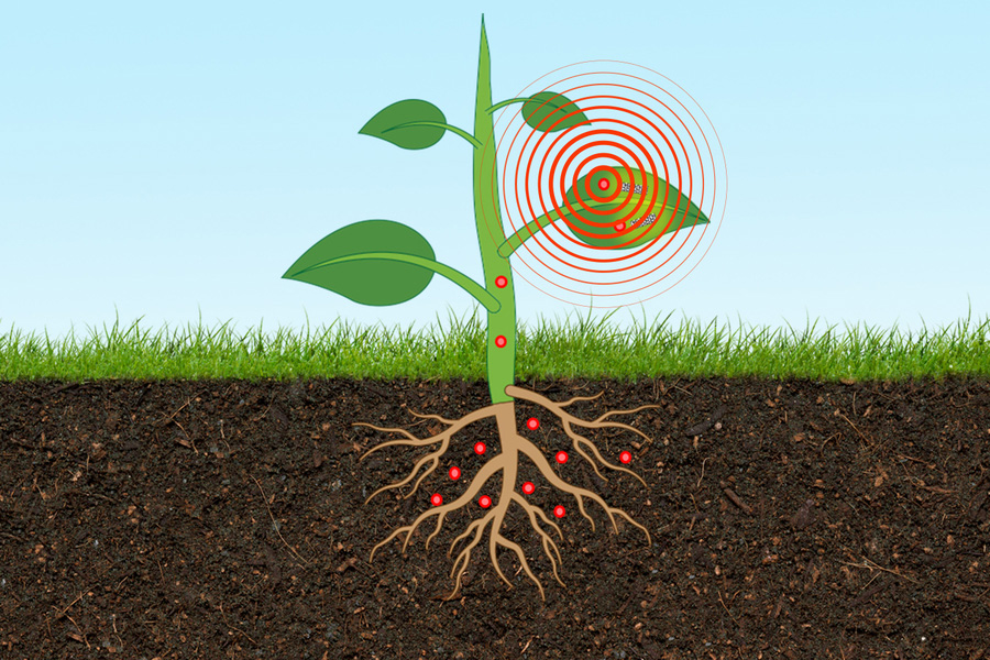 MIT Arsenic Sensor 01 PRESS 00 سنسور جدید MIT با قرارگیری درون گیاه سطح آرسنیک خاک را اندازهگیری میکند اخبار IT