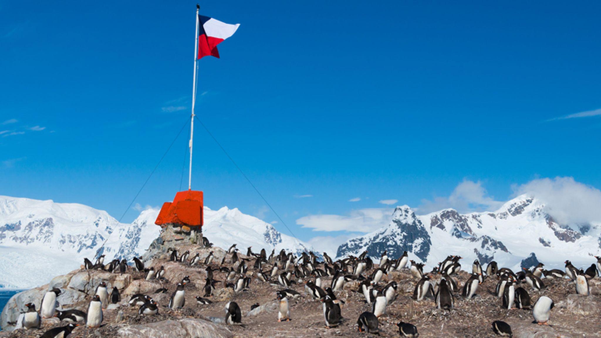 ویروس کرونا در جنوبگان