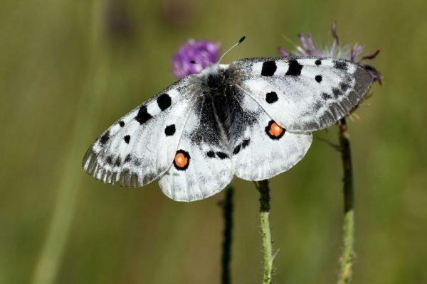 محققان معمای پرواز کردن پروانهها را سرانجام حل کردند