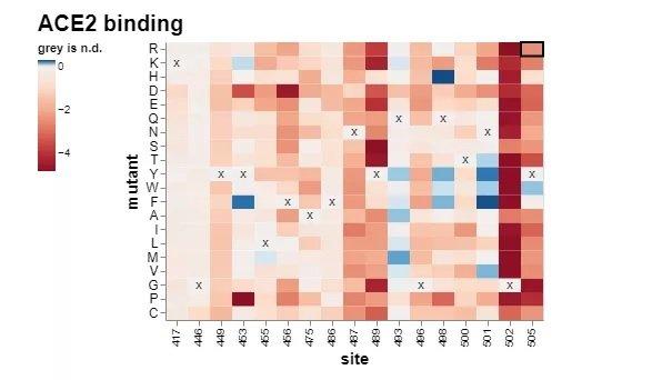 ACE2 Binding Map آیا باید نگران جهشها و گونههای ویروس کرونا باشیم؟ هرآنچه باید بدانید اخبار IT