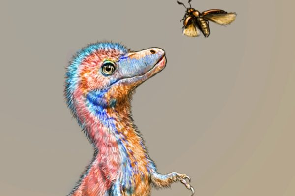 فسیل کشف شده جنین دایناسور تیرانوسور از ابعاد یکسان آن با سگها خبر میدهد