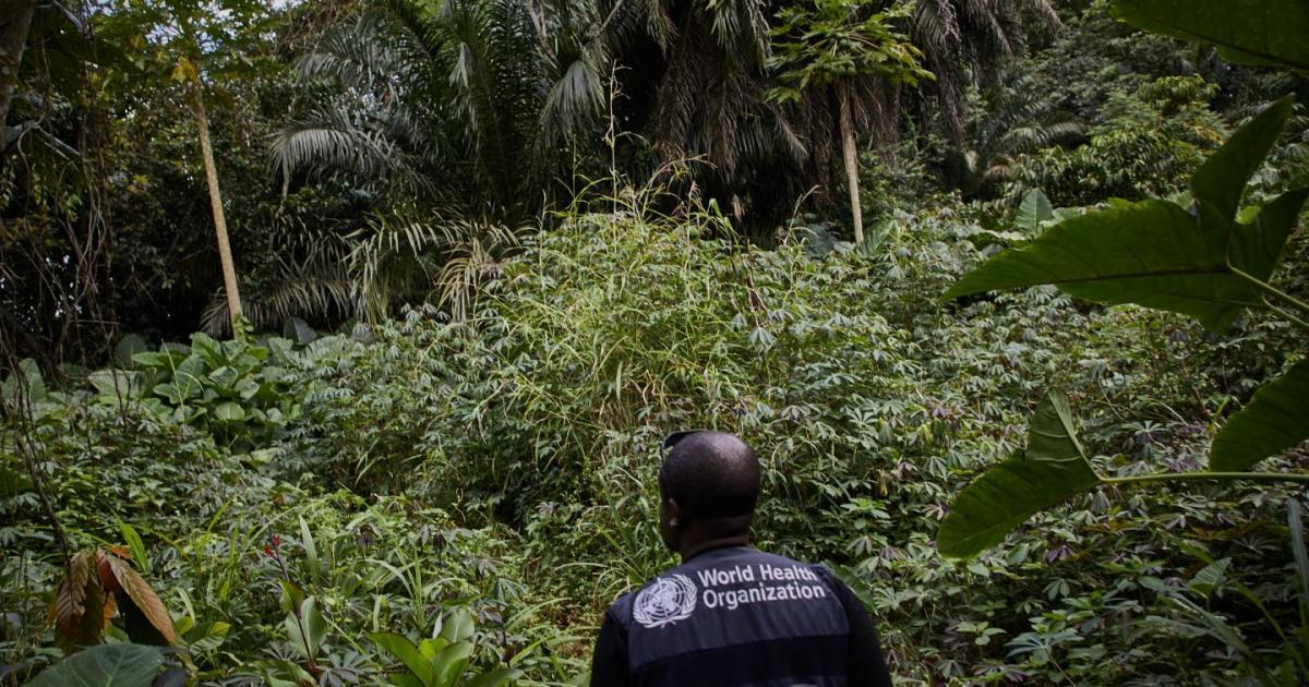 Ebola DRC شیوع دوباره ویروس ابولا در گینه و جمهوری دموکراتیک کنگو جان دستکم ۴ نفر را گرفت اخبار IT