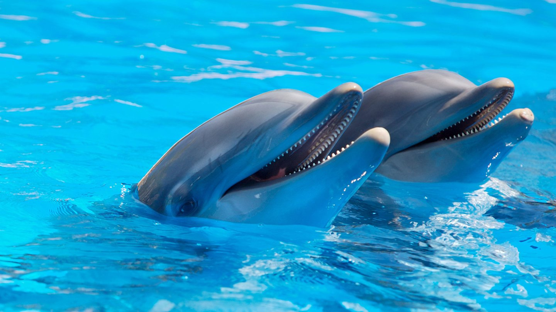 دلفینها